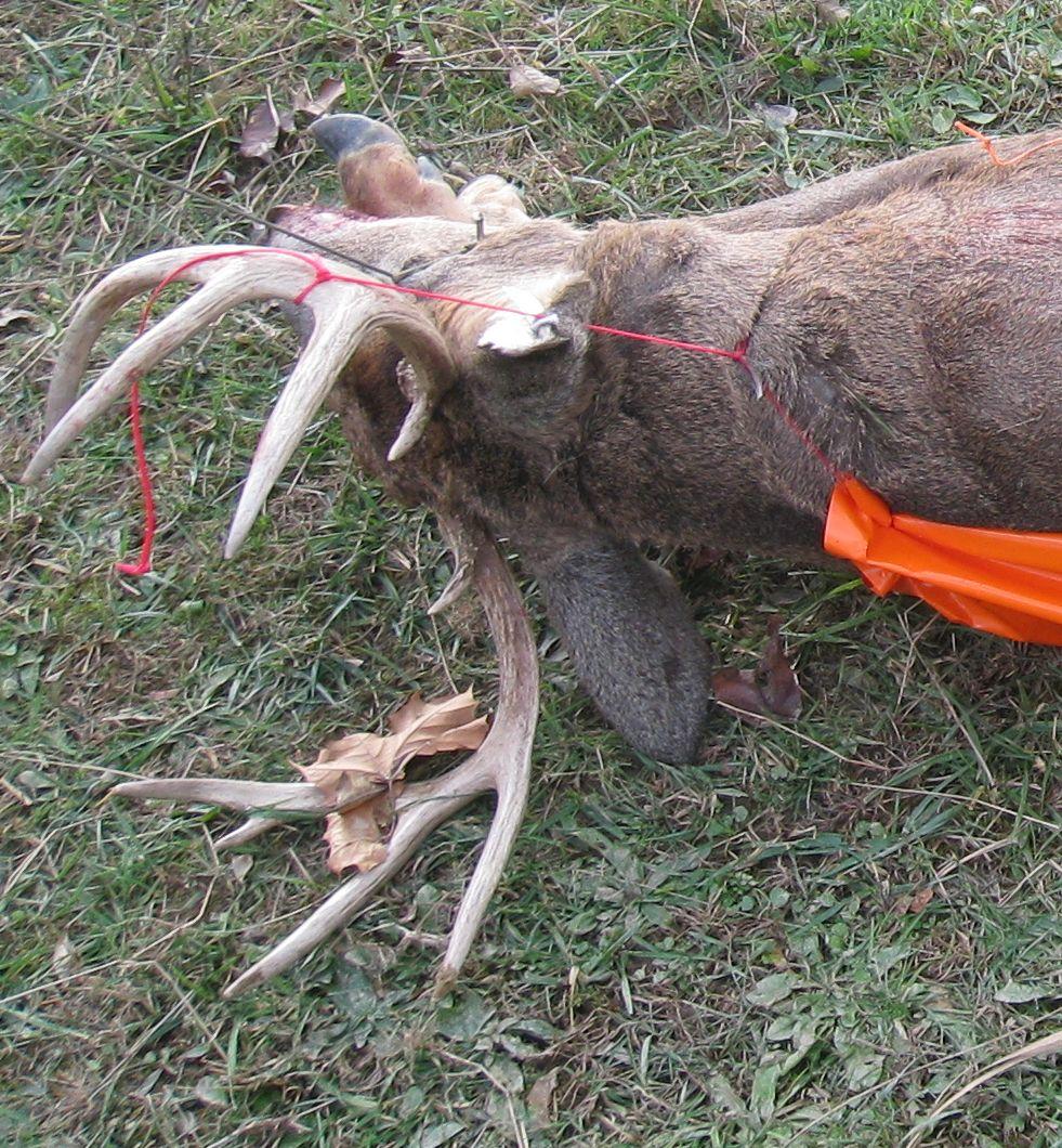5a-game-glide-deer-sled-buck5