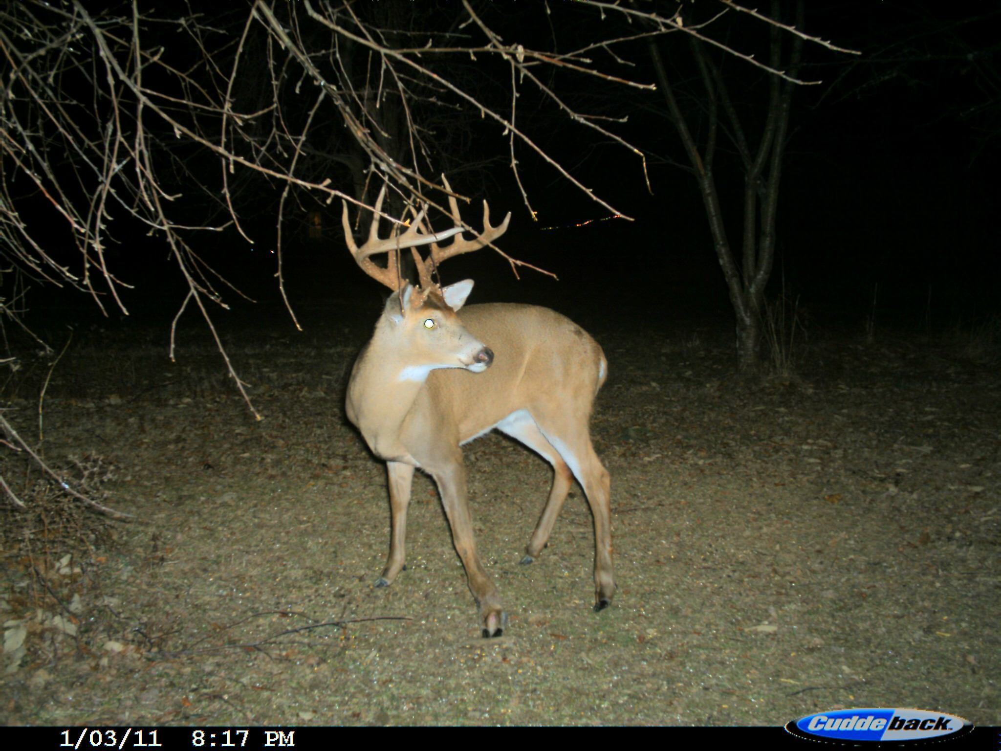 8-lefty-monster-buck-on-deer-cam2