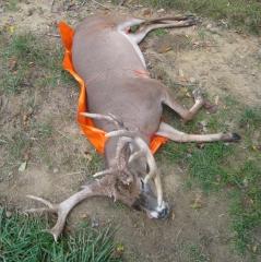 2 monster-buck-on-game-glide-deer-sled-2