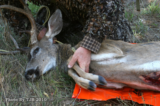 6 Game Glide-attach-rope-to-black-tailed-deer