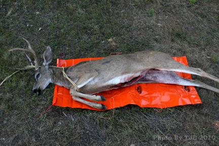 6 Game Glide-deer-sled-black-tail-preparing-to-use