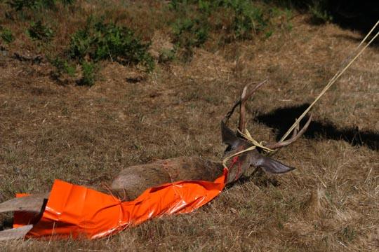 6 Game Glide-deer-sled-w-blacktail-deer
