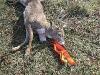 5a-game-glide-deer-sled-buck1
