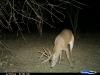 8-lefty-monster-buck-on-deer-cam1