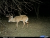8-lefty-monster-buck-on-deer-cam3
