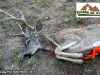 6 Game Glide-deer-sled-black-tail-deer