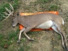 3 monster-buck-on-game-glide-deer-sled-1
