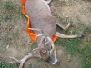 2 monster-buck-on-game-glide-deer-sled-2