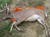 1 monster-buck-on-game-glide-deer-sled-3