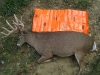 4 monster-buck-on-game-glide-deer-sled