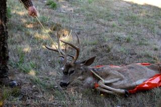 6 Game Glide-deer-sled-black-tail-deer-2