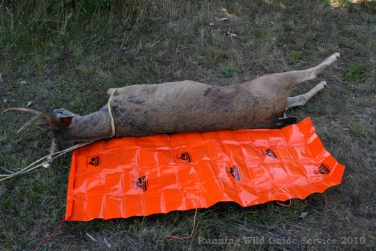 6 Game Glide-deer-sled-black-tail-preparing-to-use-2