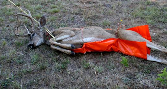 6 Game Glide-deer-sled-rwgs-black-tail-deer