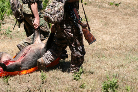 7 Game Glide-deer sled in-use-hog-wo-rope-drag-1