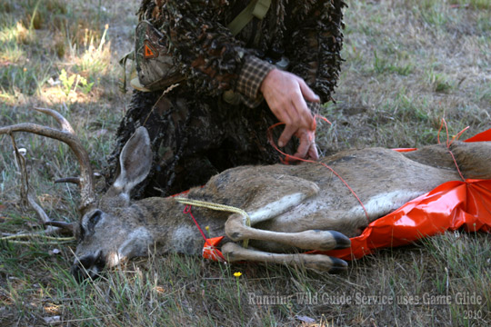 6 running-wild-guide-svc-w-black-tailed-deer-and-Game-Glide-deer-drag-sled