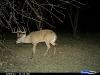 8-lefty-monster-buck-on-deer-cam3