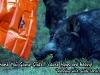7 Game Glide-deer sled w-big-hog
