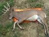 3 monster-buck-on-game-glide-deer-sled-1
