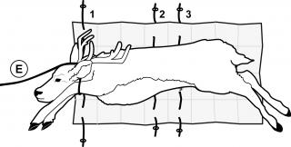 Game Glide Deer Sled Instruction Image 2